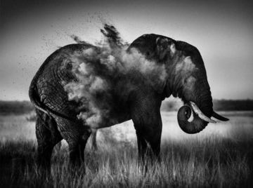 Portrait Laurent Baheux